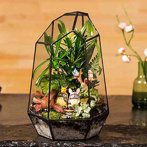 苔藓微景观植物组合